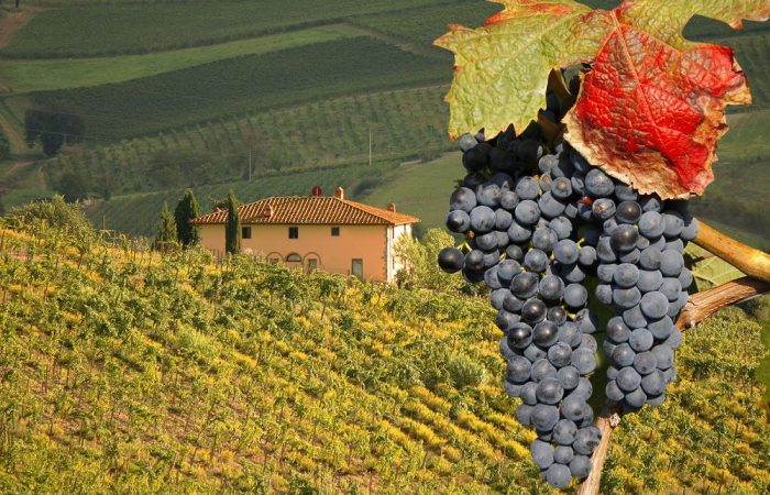 Best Barbaresco winery tour