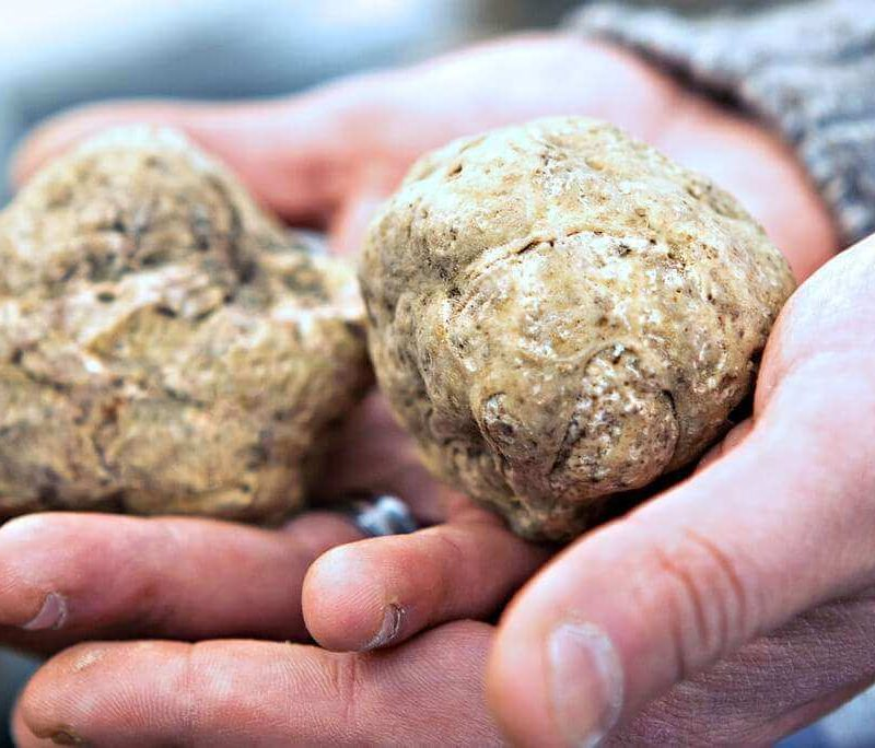truffles hunting in Langhe