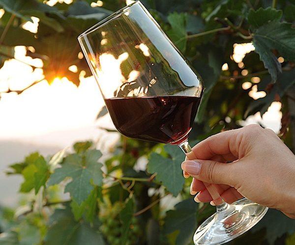 Barbaresco wine tasting